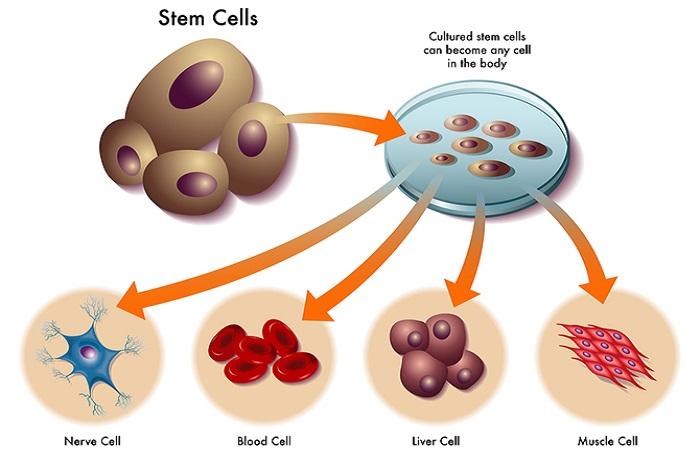 làm đẹp bằng tế bào gốc
