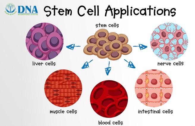 những tế bào