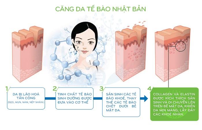 công dụng của tế bào gốc, giá tiêm tế bào gốc