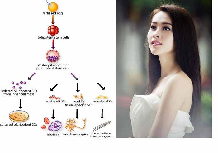 công nghệ dưỡng trắng bằng tế bào gốc