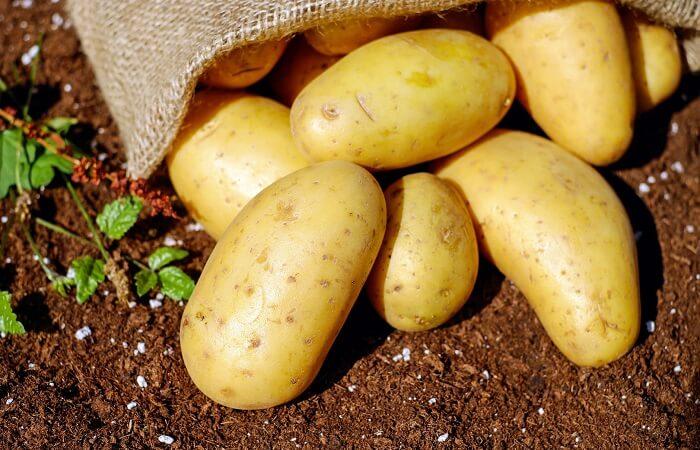 Khoai tây tốt cho sức khỏe và giảm béo
